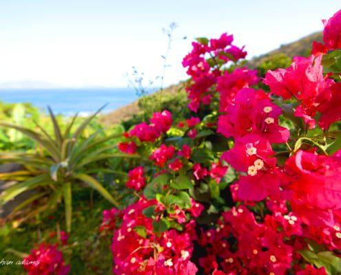 tortolla-flowers
